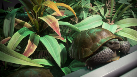 Galactapedia Leyland's Tortoise.png